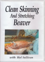 Cleaning Skinning and Stretching Beaver
