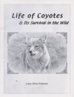 Life of Coyotes & Its Survival in the Wild